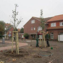 Die Bäume sind gepflanzt.