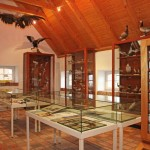 Vogelhalle